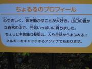 201211131639001.jpg